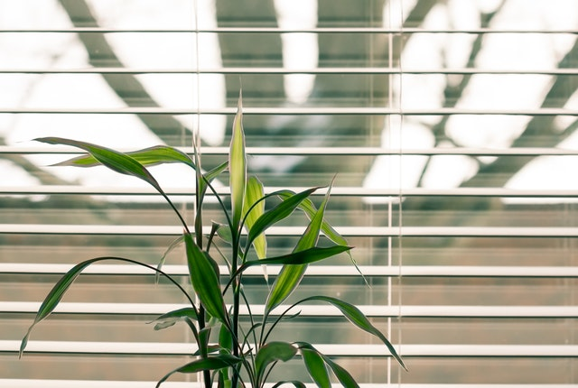 green leafy plant in front of a window