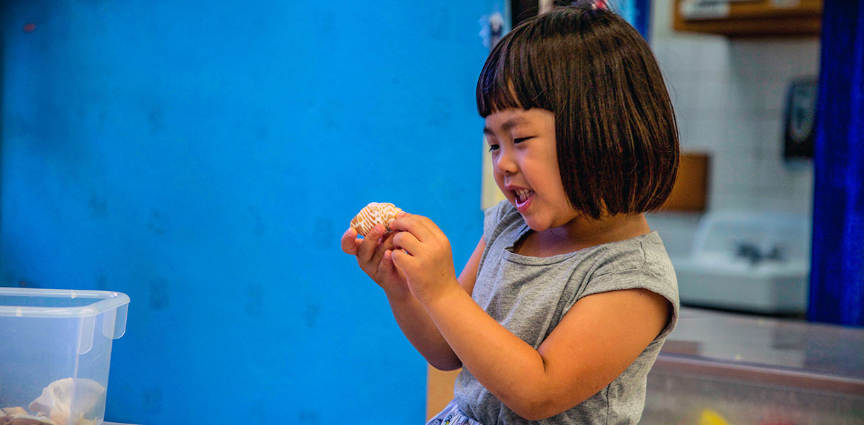A pre-K student in a classroom looks admiringly at a sea shell she's holding